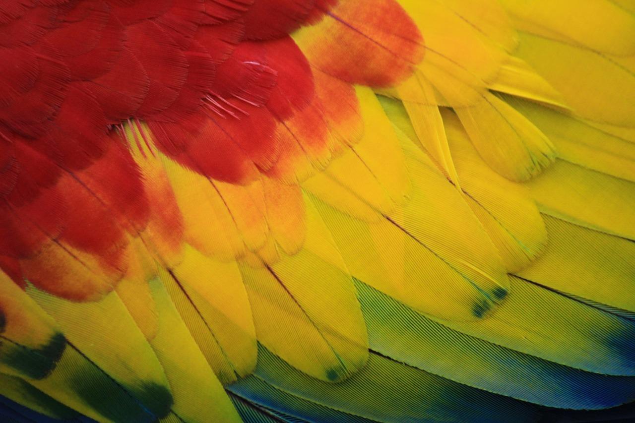 parrot-2909834_1280